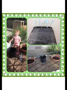 Sofia's Herb Garden